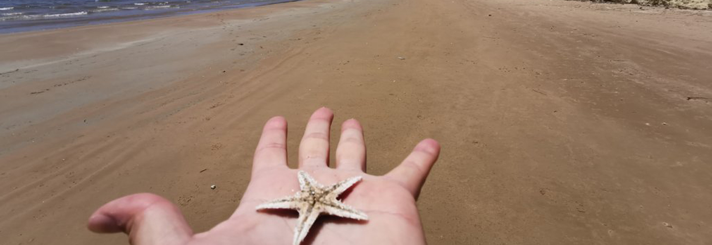 ISPICA – Porto Ulisse ovest – La stella marina