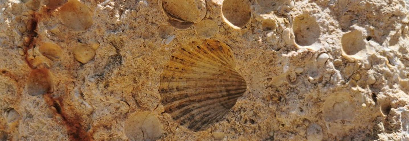 MELLIEHA – IMGIEBAH BAY – Tracce di fossili sulla falesia