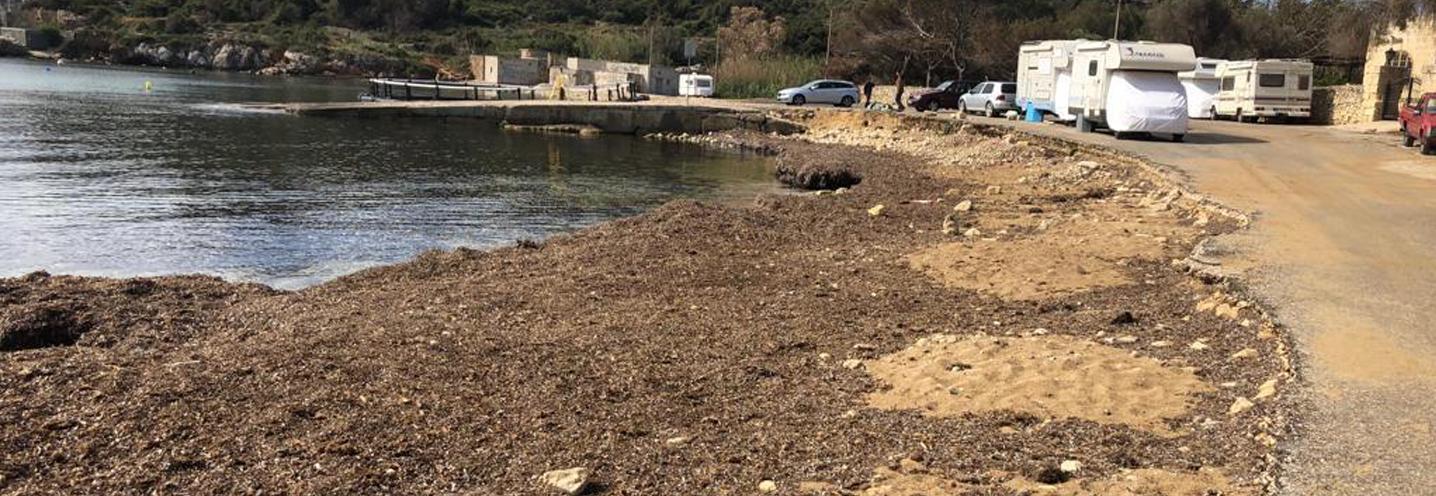 MELLIEHA- MISTRA BAY – La spiaggia e i depositi di Posidonia Oceanica