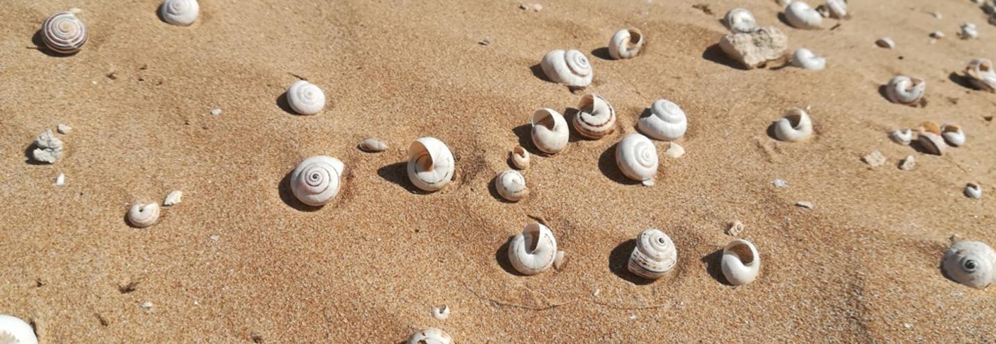 Modica – Marina di Modica – Resti di gasteropodi