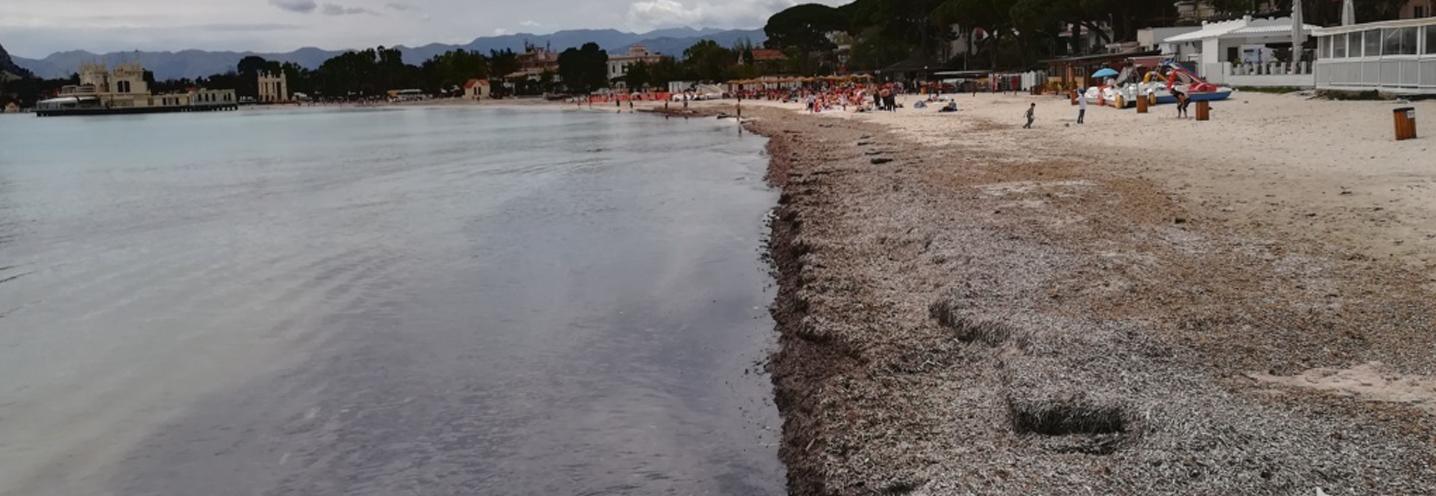PALERMO – Mondello – Particolare della Posidonia Oceanica spiaggiata