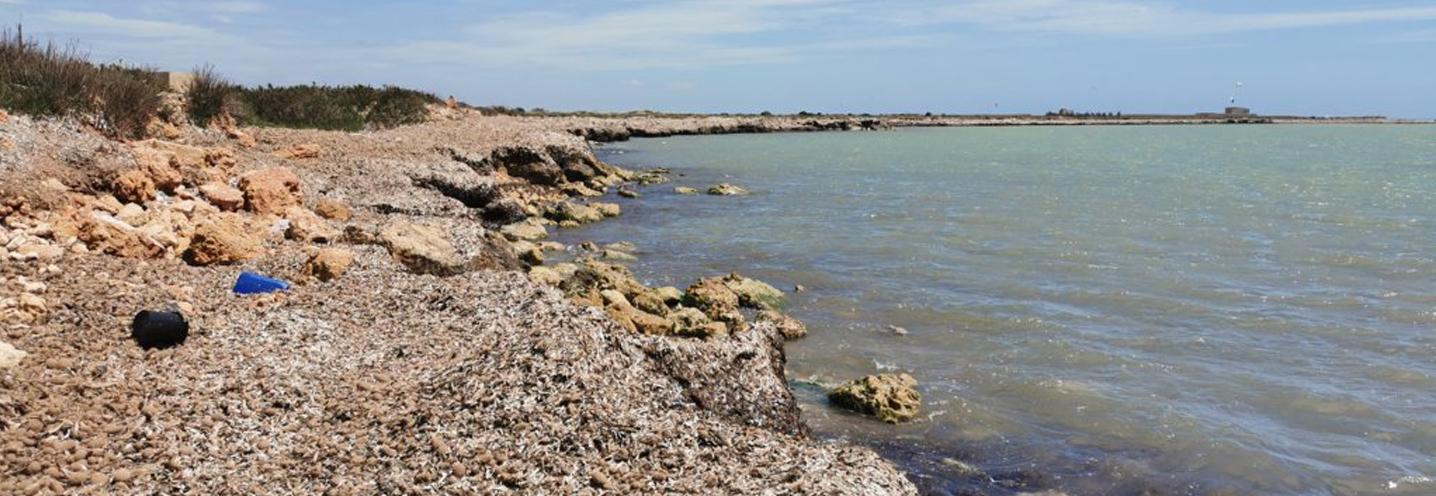 PETROSINO – Faro Capo Feto – Dettaglio della battigia