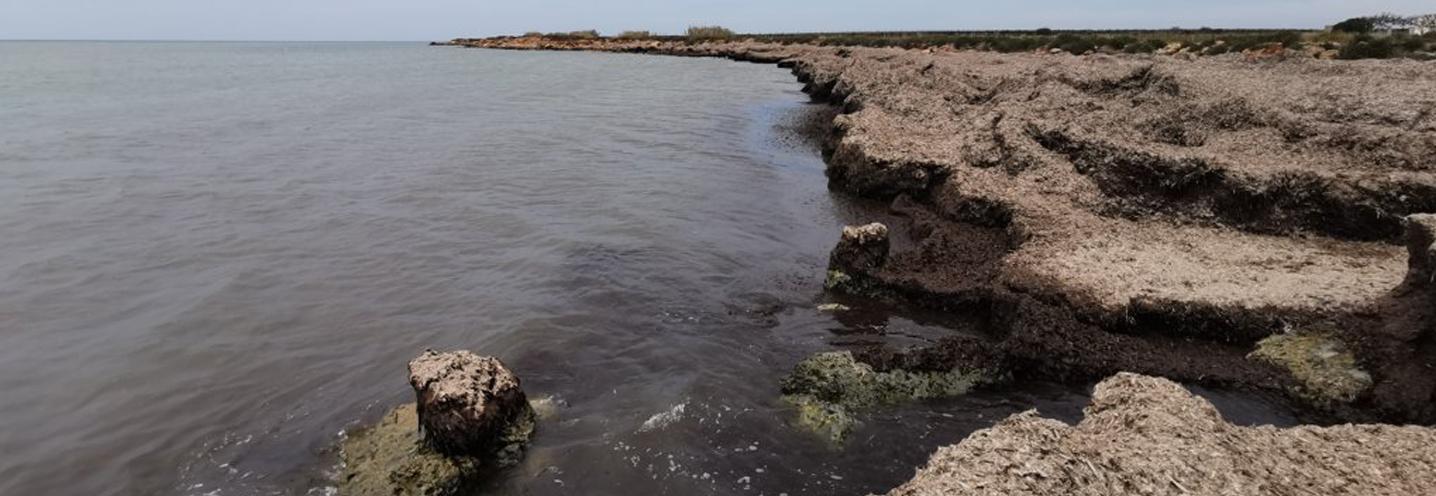 PETROSINO – Faro Capo Feto – Spessore consistente della Posidonia spiaggiata