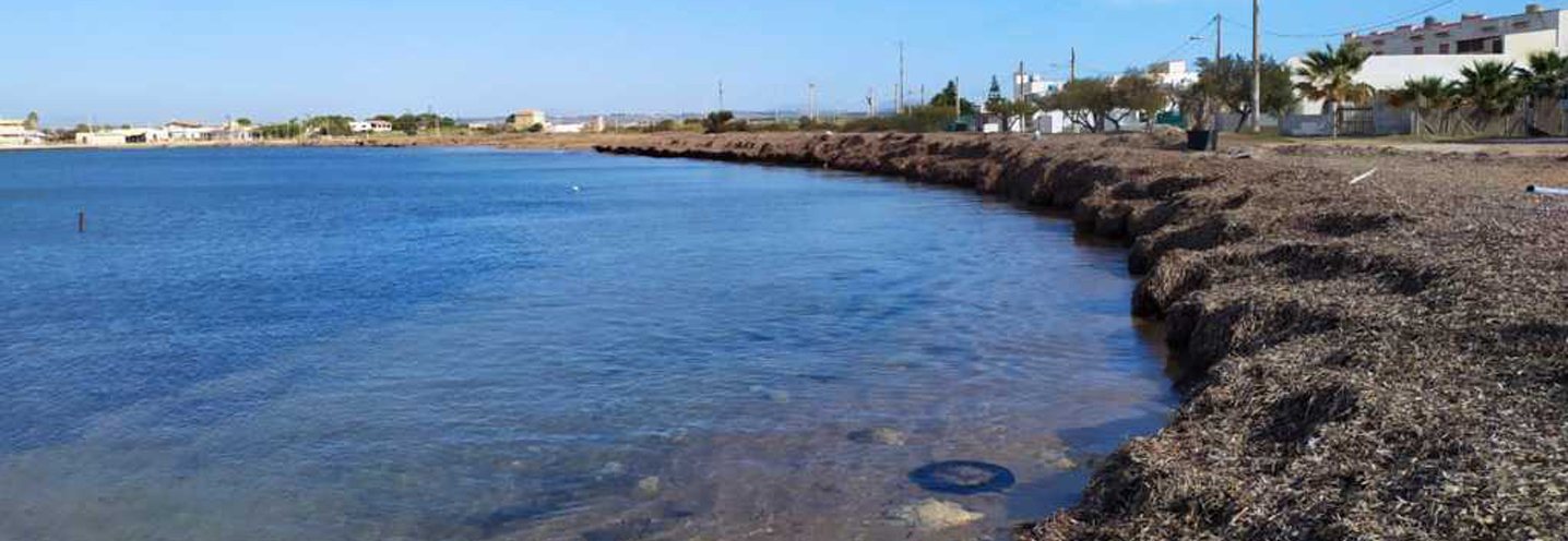 PETROSINO – Torre Sibiliana – Battigia costituita da Posidonia spiaggiata