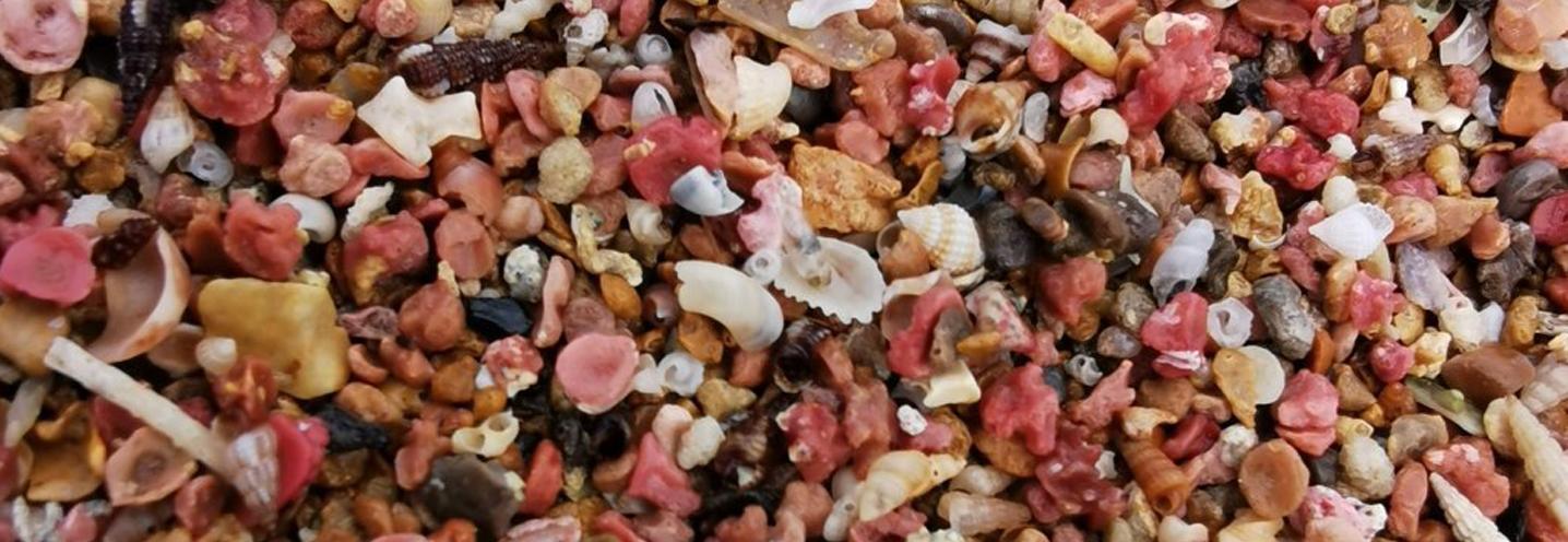 PETROSINO – Torre Sibiliana – I coralli sulla battigia