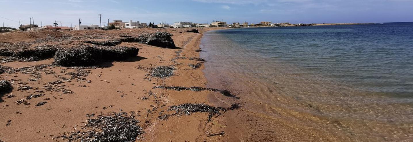 PETROSINO – Torre Sibiliana – I sedimenti della pocket beach