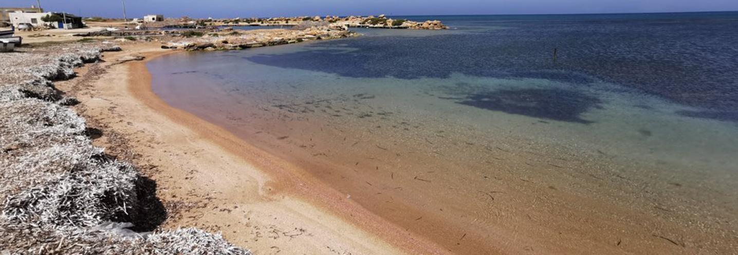 PETROSINO – Torre Sibiliana – Panoramica, le praterie di posidonie a mare e i depositi spiaggiati