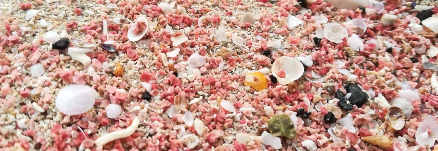 SAN VITO LO CAPO – Coloratissimi corali sulla battigia